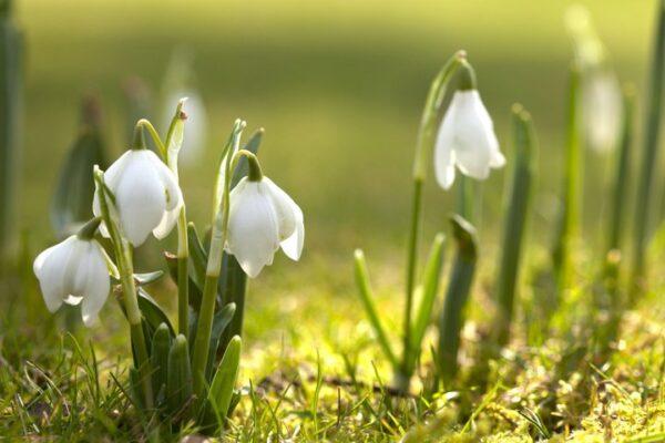 Весна идет – весне дорогу! Спектакли марта