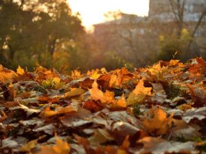 Read more about the article Театральный октябрь. Афиша Москвы